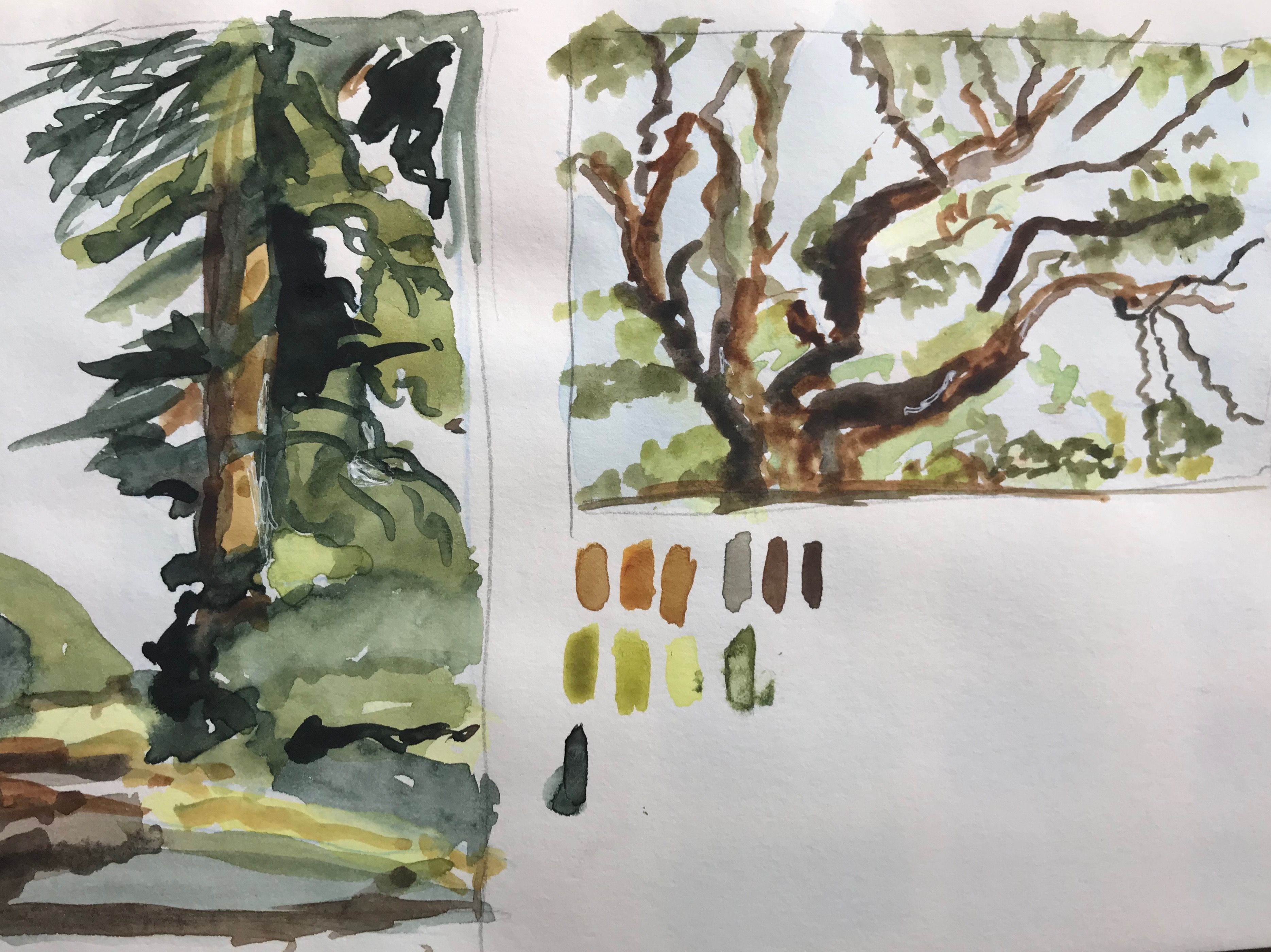 2 14 19 Second Effort At Watercolor How To Paint Trees Workshop