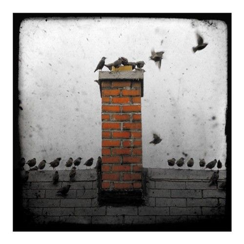 by gothic crow  Check out this photographer at http://www.etsy.com/shop/gothicrow?ref=pr_shop