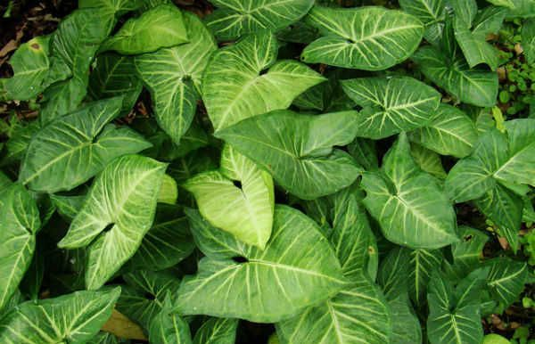 Sing nio terrazaplantas plantas de sombra plantas de for Plantas decorativas resistentes