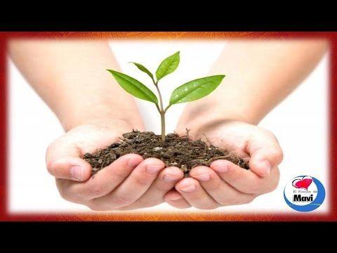 Plantas purificadoras de aire para eliminar las toxinas nocivas - YouTube