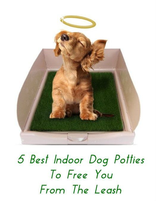 Best Indoor Doggy Potty Solutions To Free You From The Leash - Indoor dog bathroom solutions