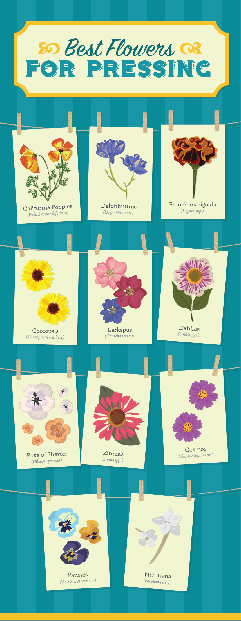 Crafting With Dry Flowers A Guide To Drying And Pressing