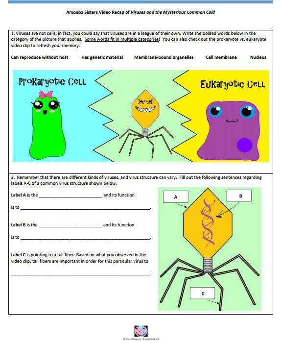 Virus handout made by the Amoeba Sisters. Click to visit website and ...