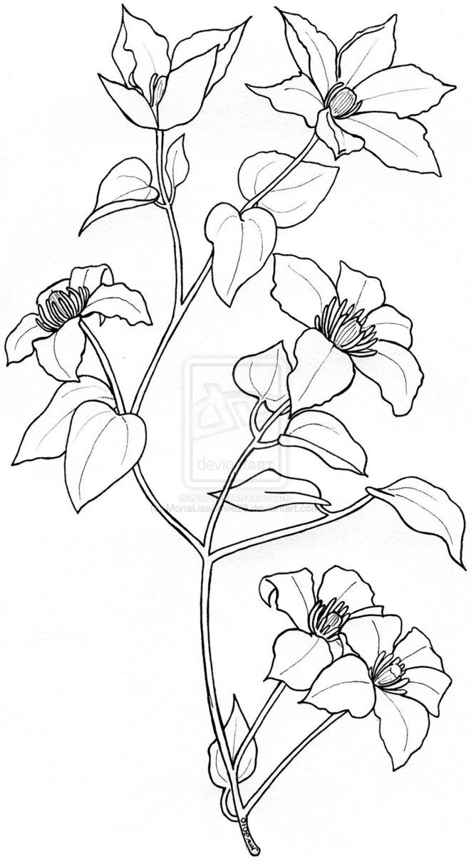 Clematis Tattoo Design By Monalisasmile23 On Deviantart Flower Drawing Vine Tattoos Clematis Flower