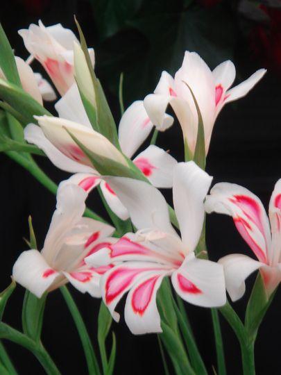 Ld09p33e4gv00lf Conn D Subminiature Pin 9 Pos 2 74mm Solder Ra Thru Hole 9 Terminal 1 Port 50 Items Flower Show Southport Flower Show Gladiolus