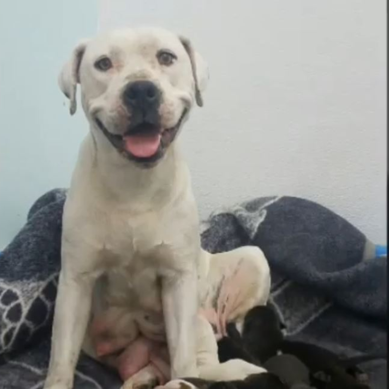 Shelter Pens Emotional Note To Person Who Left Pregnant Dog On Side Of Road Pregnant Dog Animal Shelter Dogs