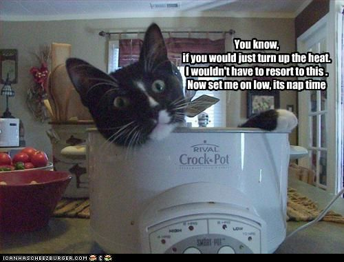 Image result for lol cats crockpot