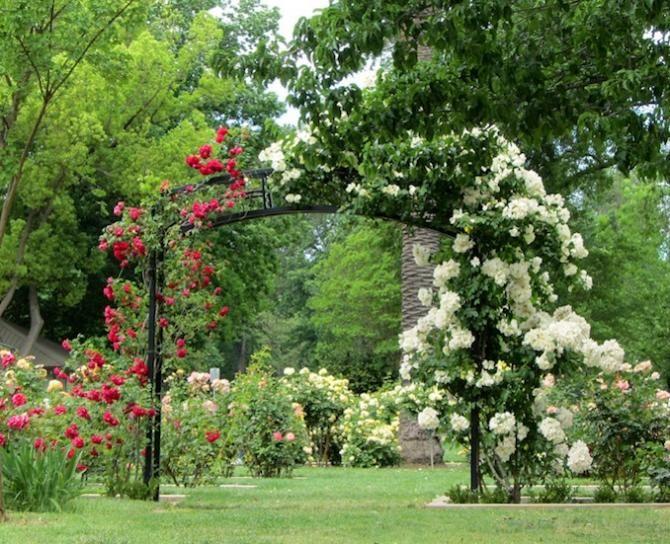 Mckinley Park Rose Garden It Has Wedding Written All Over It