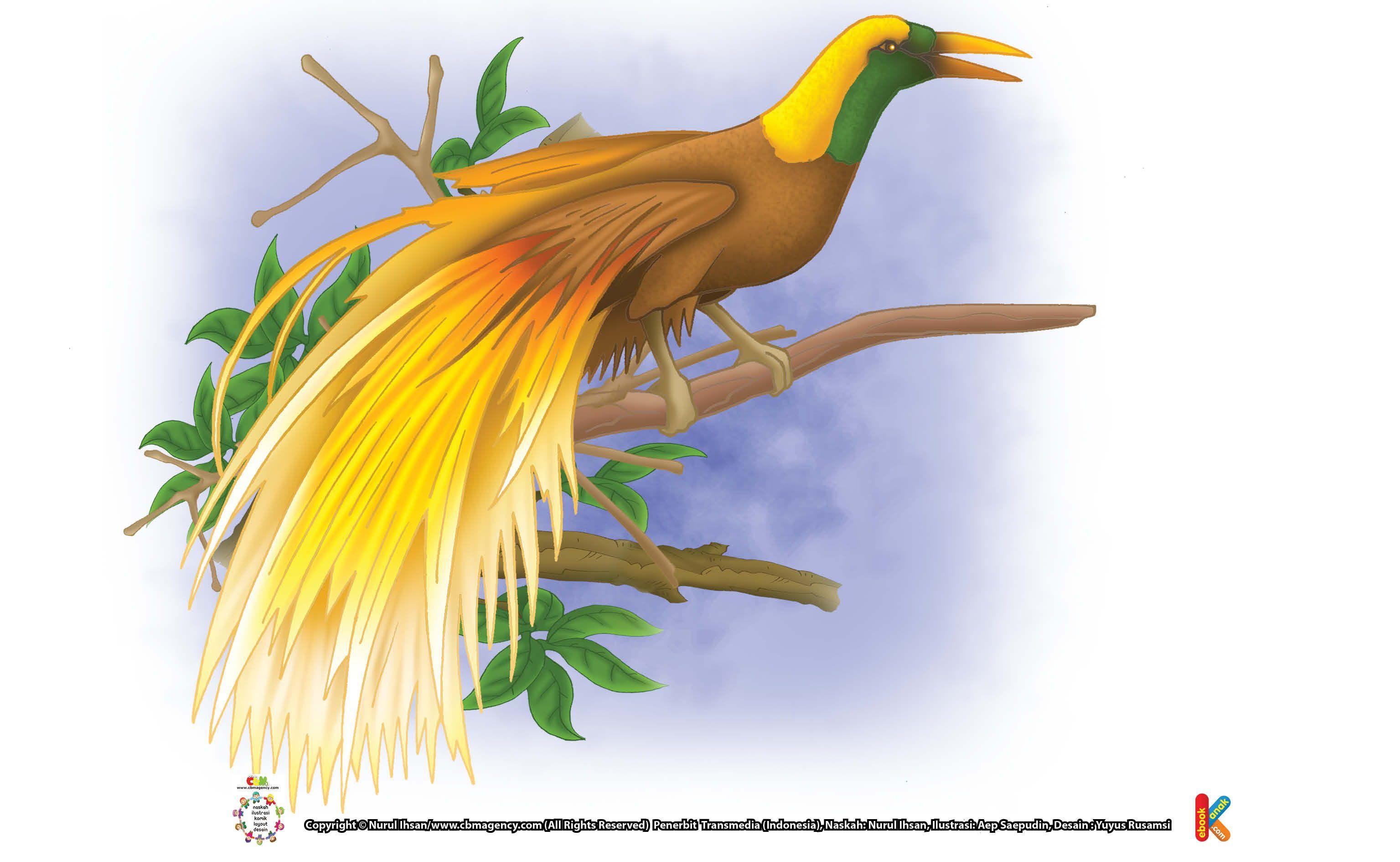 Cendrawasih Kenapa Disebut Burung Dari Surga Bee Eater