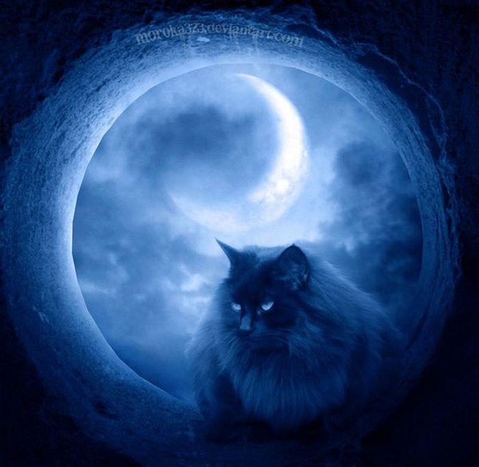 картинки котики и луна
