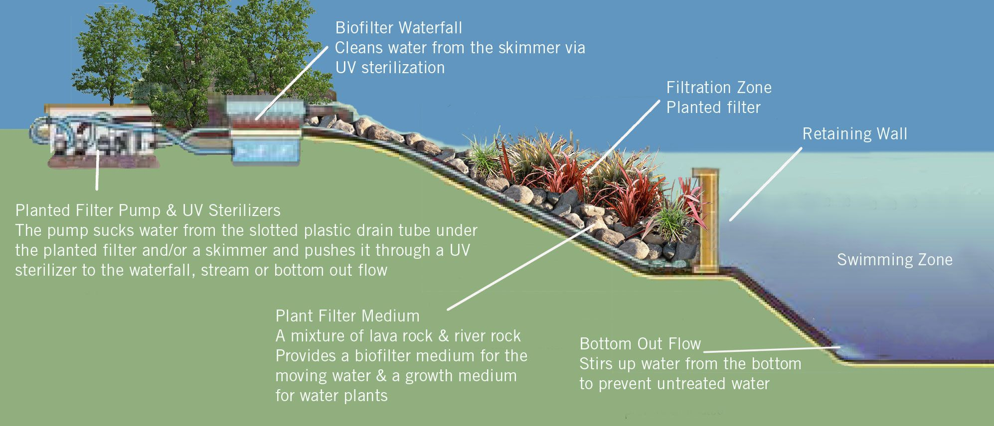 Bio Swimming Pools The Self Cleaning Mini Ecosystems Natural