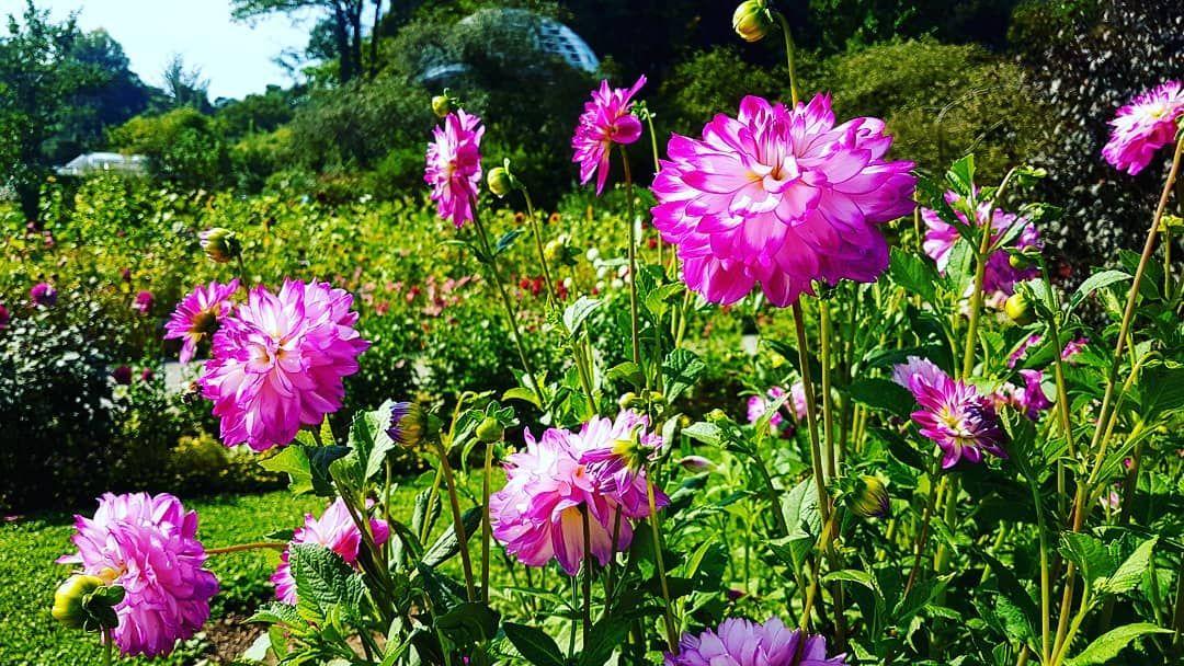 Botanischer Garten Munchen Nymphenburg Der Botanische Garten Besitzt Uber 14 000 Pflanzenarten Aus Der Ganzen Welt Seine In 2020 Instagram Plants Munich