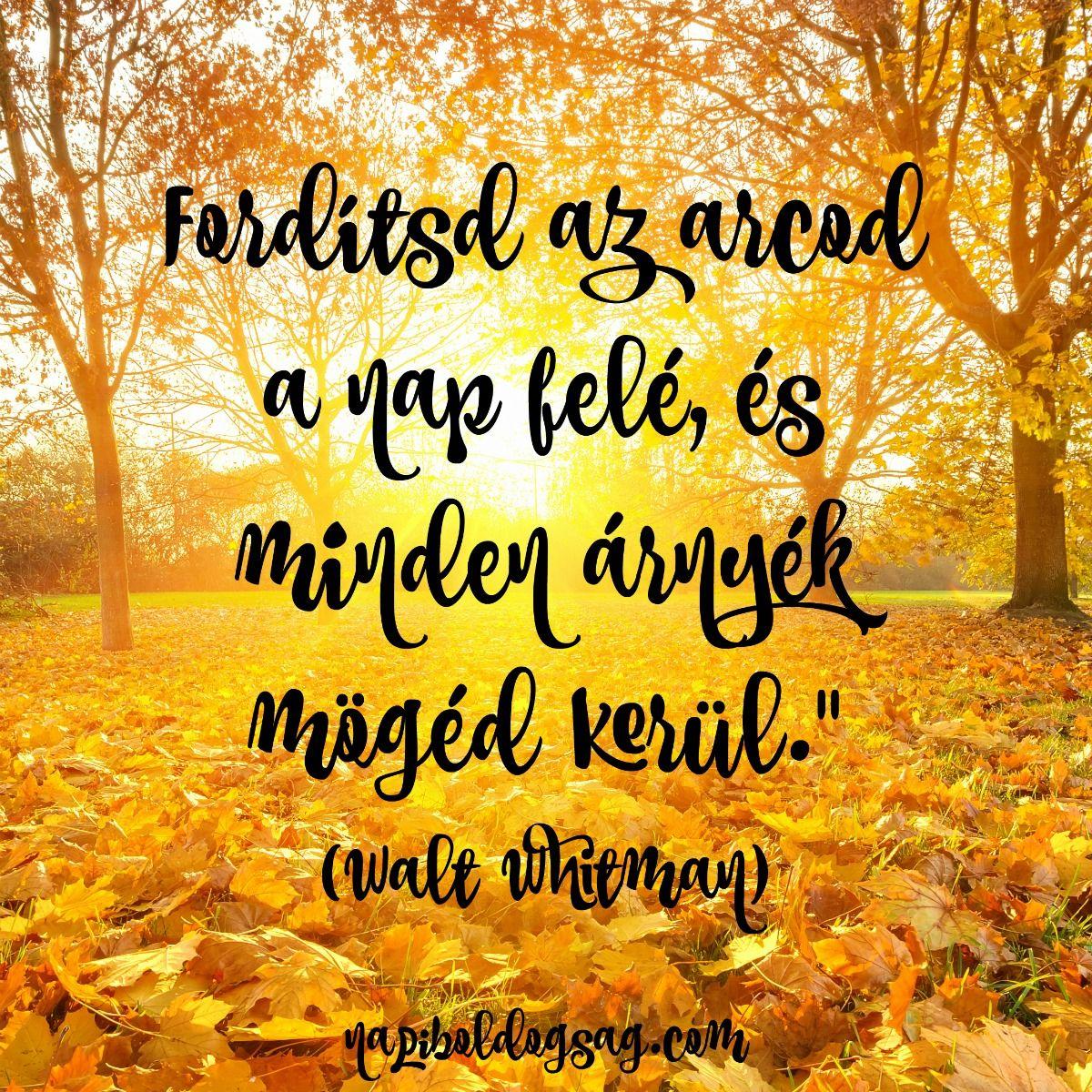 egy nap idézetek Fordítsd az arcod a nap felé | Hungarian quotes, Amused quotes