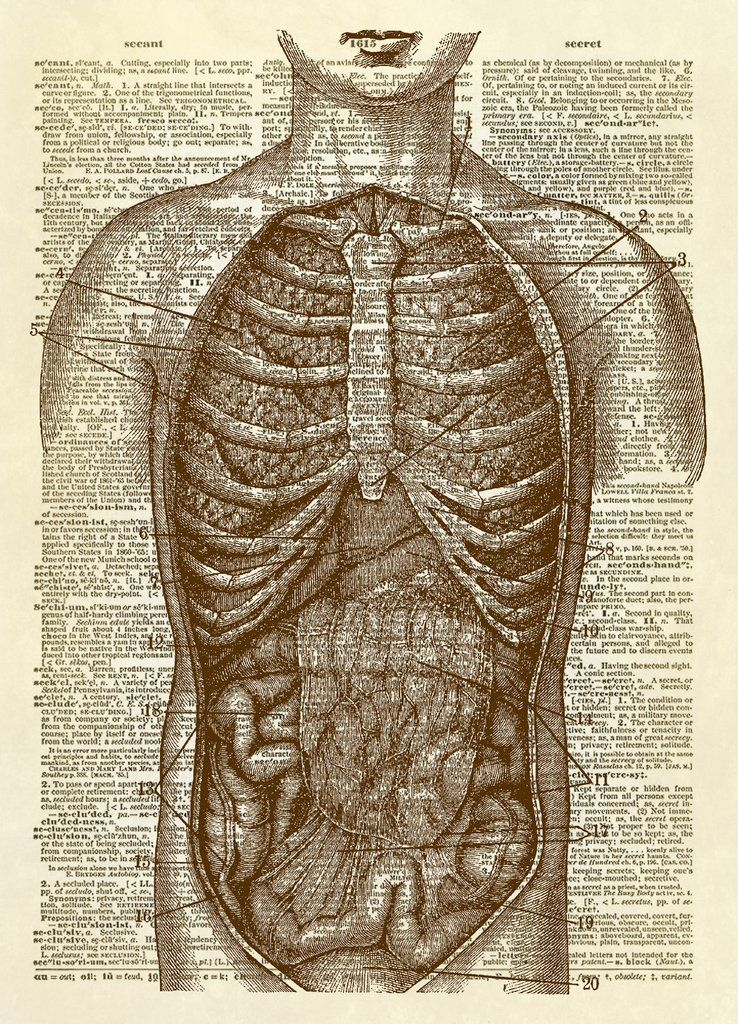 Internal Human Anatomy Dictionary Art Print Dictionary Art Human