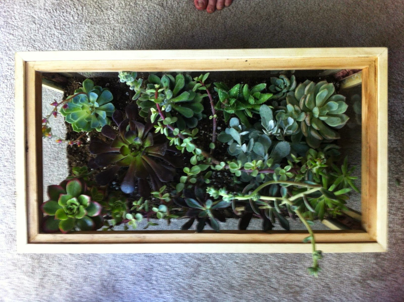 Leaning into green from aquarium to terrarium other plants