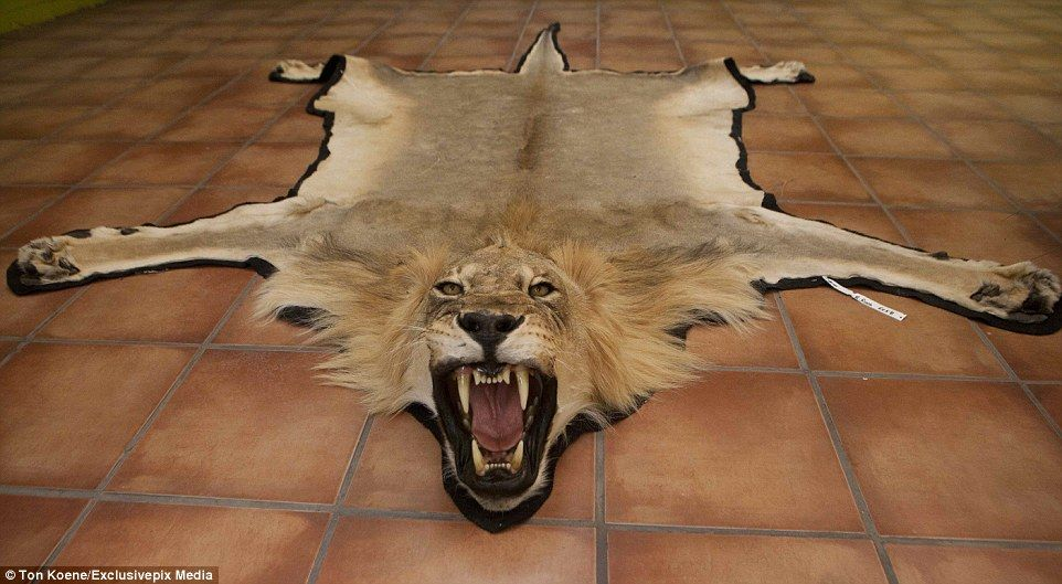 Lion Rugs Home Decor