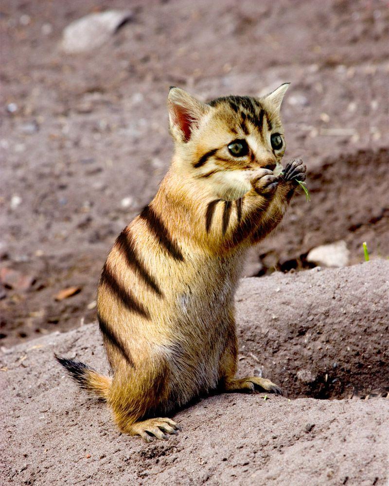 100+ Best Animal hybrids images   animal mashups, photoshopped animals,  weird animals