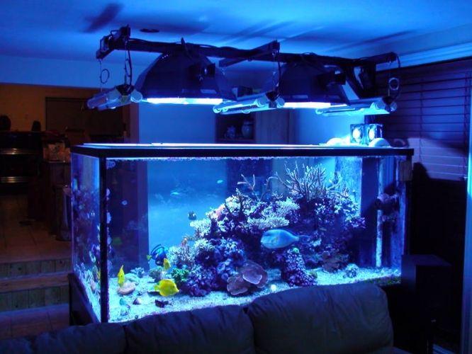 Salt water aquarium 280g starphire peninsula saltwater for Saltwater aquarium fish for sale