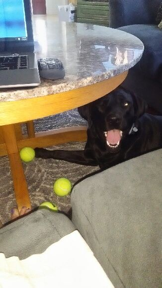 I wish 3 new tennis balls made me this happy