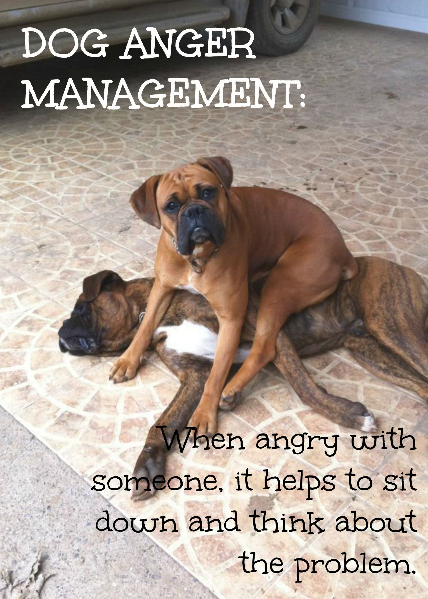 boxer thing   www.fordogtrainers #quote #dog   #boxers