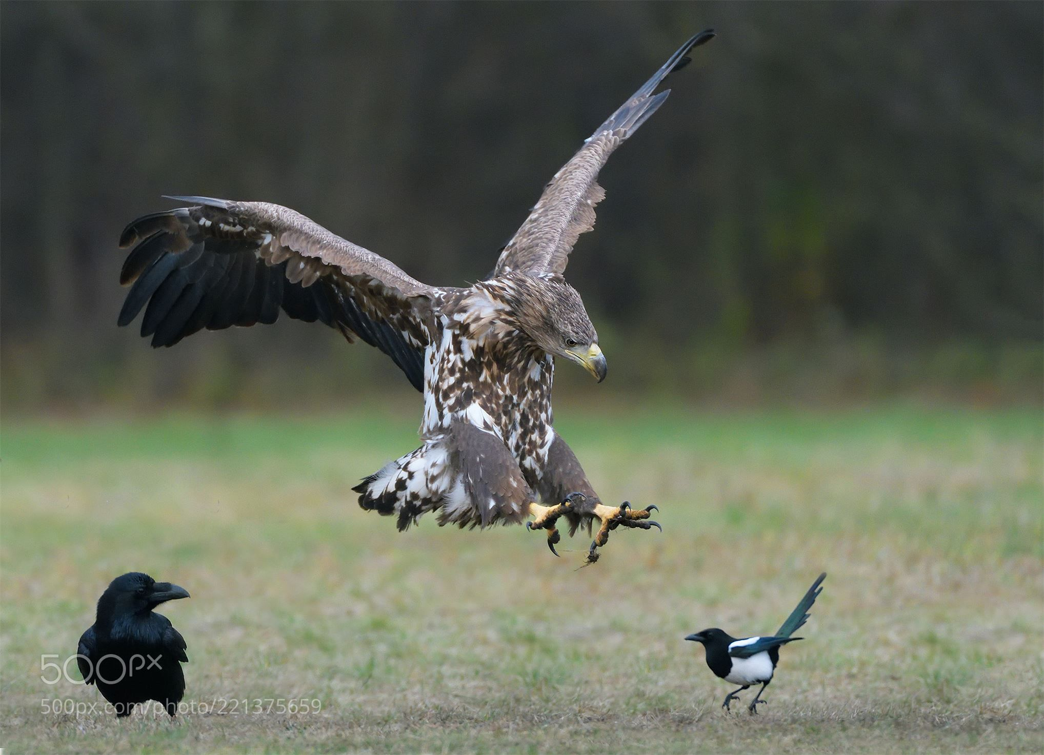 Tricky Situation (Harry  Eggens / Groningen / Netherlands) #NIKON D500 #animals #photo #nature