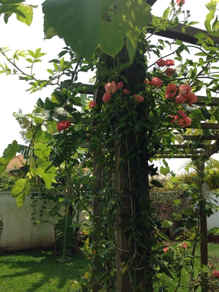 Muito amor por este jardim/ eu plantei/ casa das Corujas/ Brasil