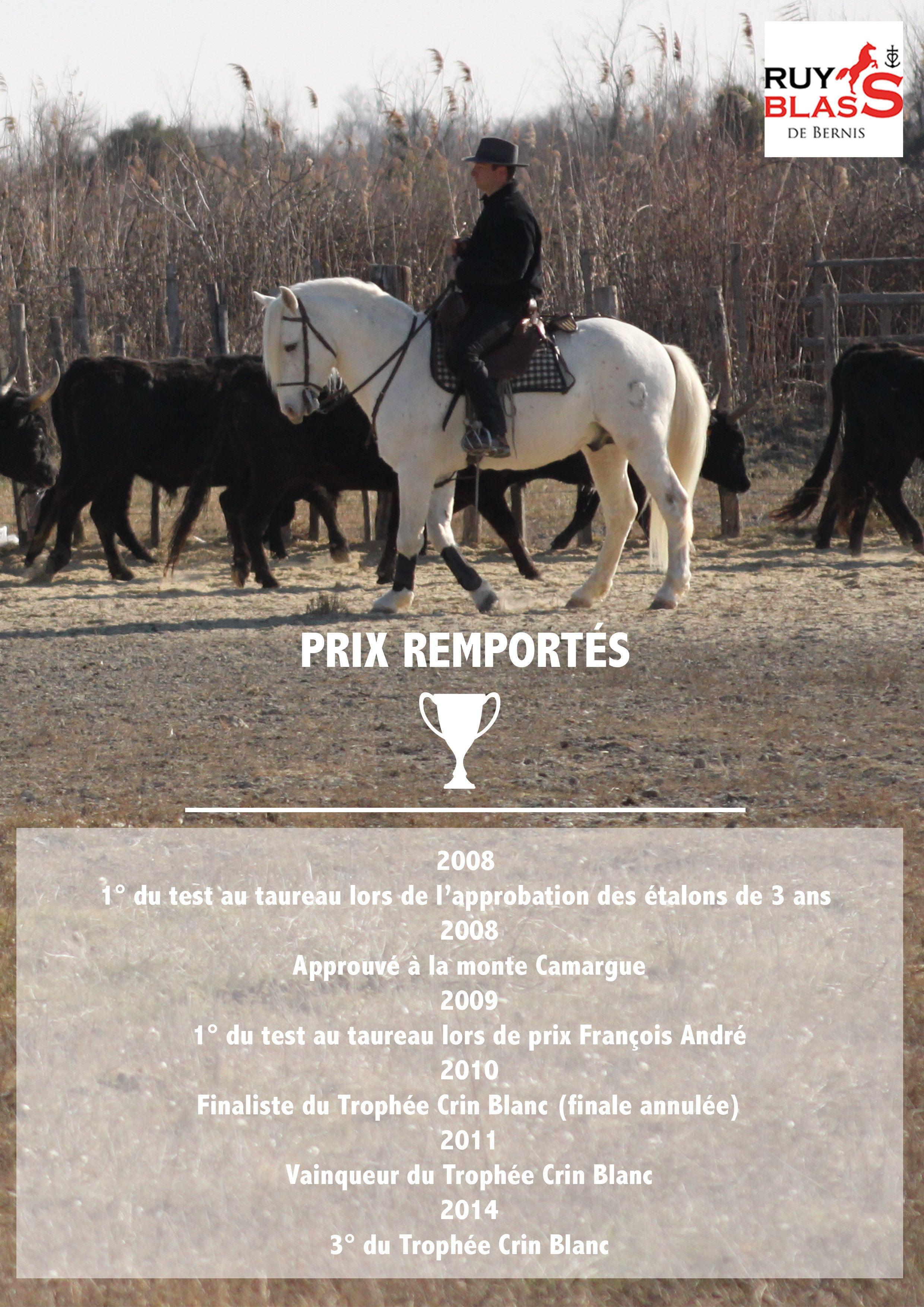 Prix de Ruy Blass de Bernis #horse #camargue #champion http://www.chevalcamargue.fr/evenements-et-prix/