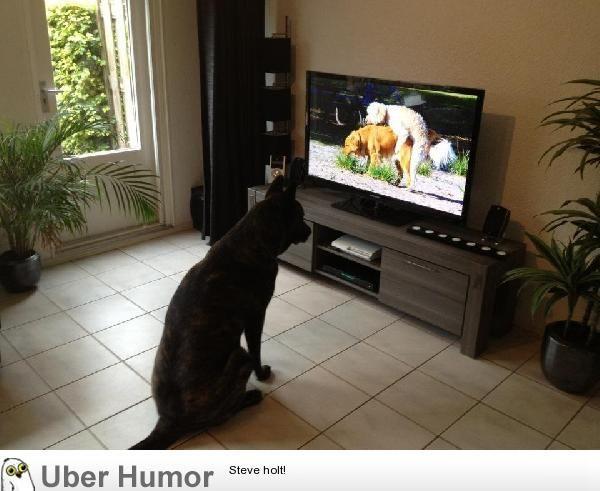 Pin By Marija Lukic Jovanovic On Hahaha Watch Dogs Funny