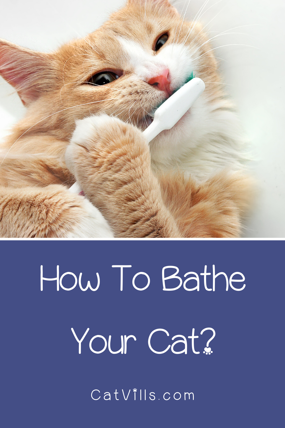 Bathe your cat? No, seriously! Stop laughing! You totally
