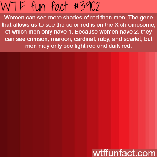 Wtf facts funny interesting weird facts facts for See more com