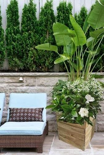Razones para cultivar en jardineras de madera macetero - Plantas para jardineras ...