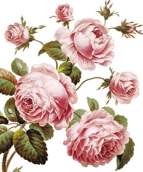 .Decoupage Roses Transfer, printable