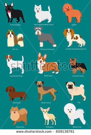 Small Dog Breeds Set With Breeds Names 犬 種類 小型犬種 犬ポスター