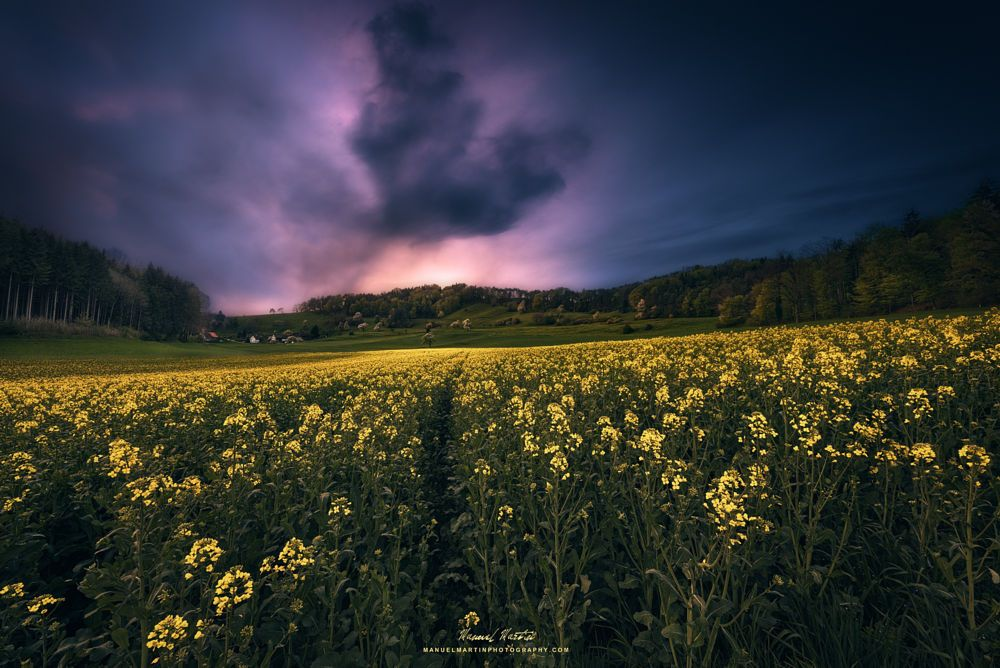 Rapeseed field by Manuel Martin on 500px