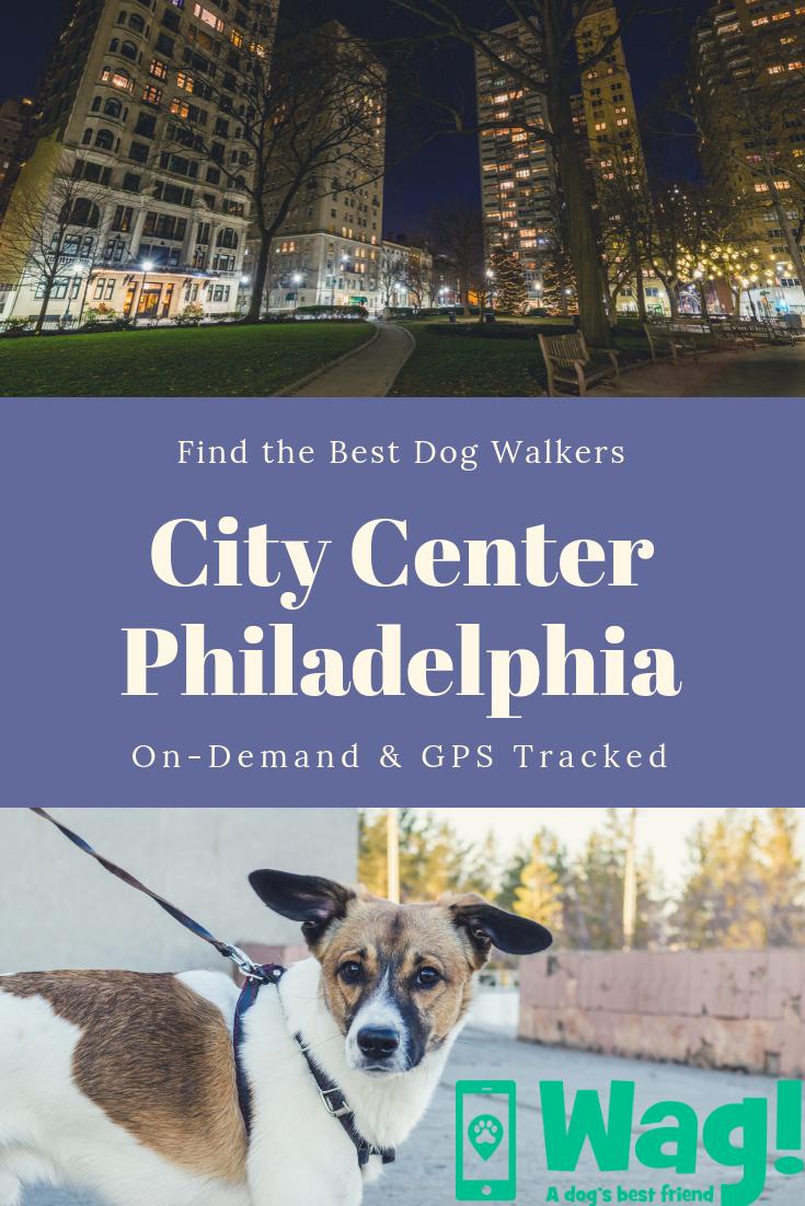 Best Dog Walkers In Center City Of Philadelphia Pa Dog Walker