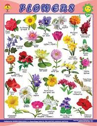 Related Image All Flowers Name Indian Flower Names Flower Chart