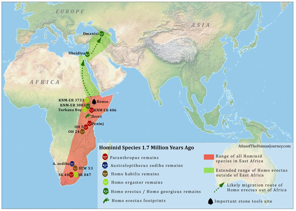 Homo Erectus Map | Anthropology/Archeaology | Human evolution, Map