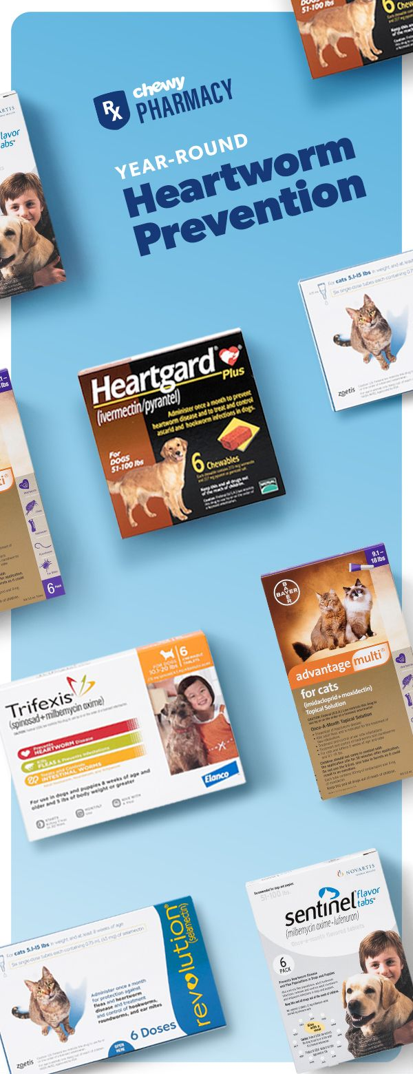 Prevent heartworm disease now with our selection of