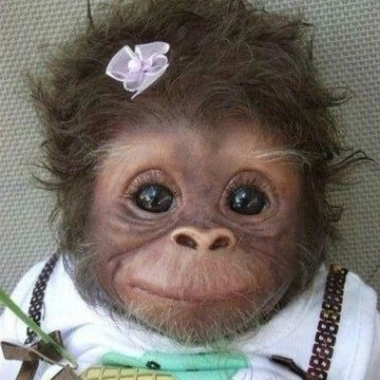 Baby monkey sad face funny picture
