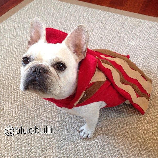 Bacon The Frenchie Named Bacon Pets Cute Animals