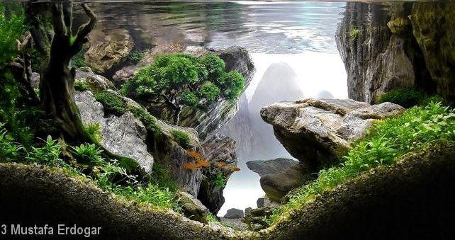 Aquascape Design pinck yeo on planted tank | pinterest | aquariums, aquascaping