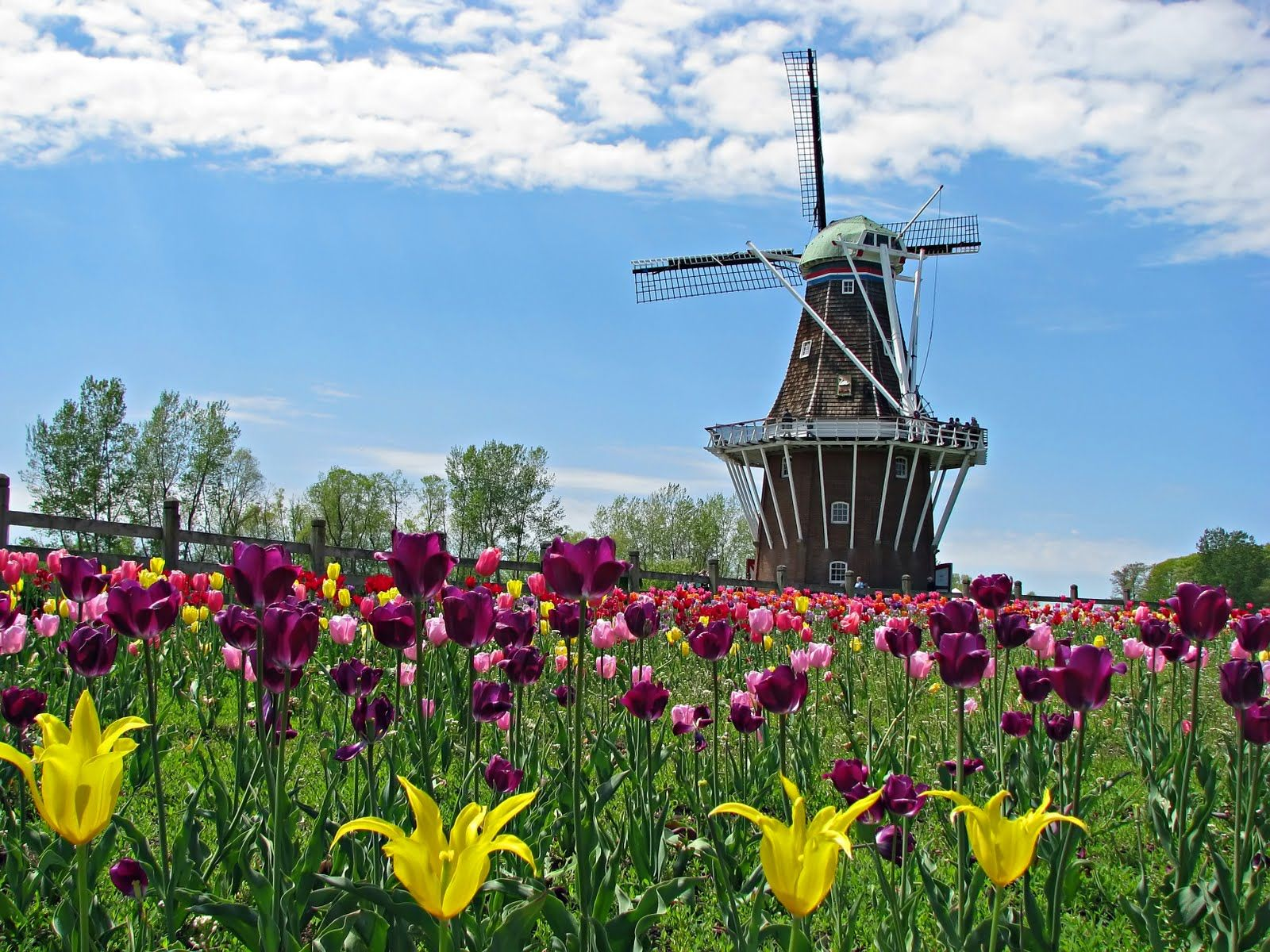 Holland michigan tulip festival molinos de viento for Tiny house holland michigan