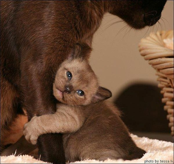 Dont Leave Me Mommy Animals Cat Lovers Cute Animals