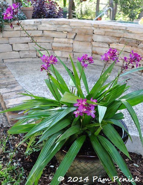 Melody S Garden Of Palong Plants In San Antonio Digging