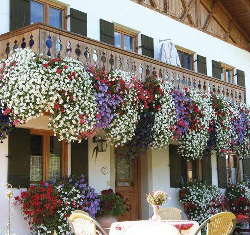 Plantas colgantes para balcones buscar con google - Mesa colgante para balcon ...