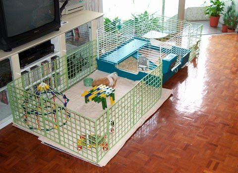 Nice alternative cavy cage rabbit guinea pig and for Build your own guinea pig cage