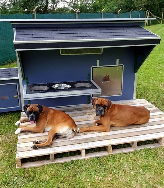 15 brilliant dog house ideas designs page 9 of 15 check out these dog house ideas solutioingenieria Choice Image