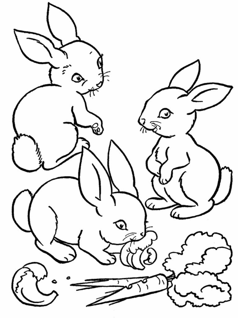 printable rabbit coloring pages for kids - Rabbit Coloring Pages