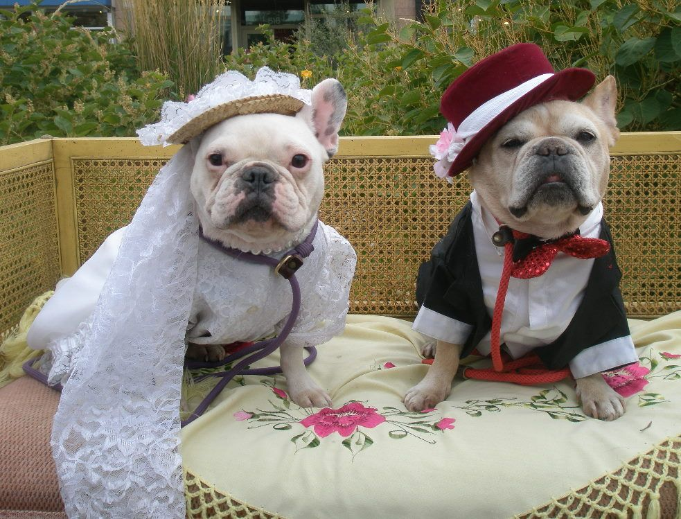 Find This Pin And More On Wedding Pets