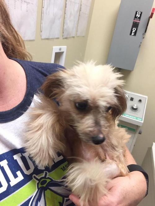 Adopt Kiley On Pets Dogs Adoption